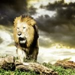 10 ALPHA MALE TRAITS AND HOW TO BECOME ONE